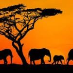 なぜ、アフリカは発展しなかったのか?